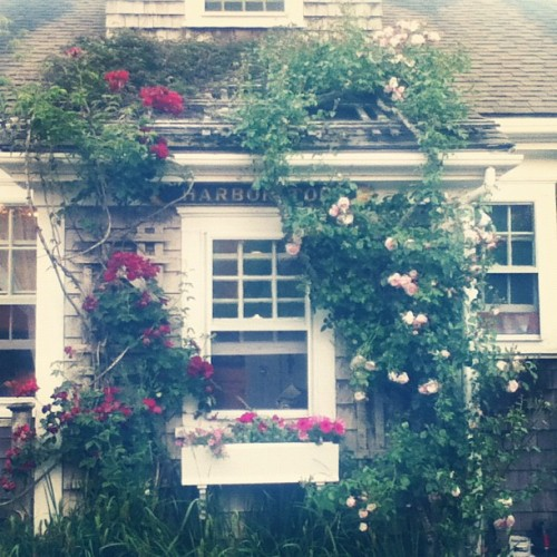 #Nantucket #Vacation #Flowers #House #Quaint (Taken with Instagram)