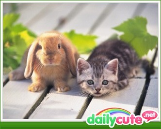 The adventures of kitty and bunny http://bit.ly/KFyUc6