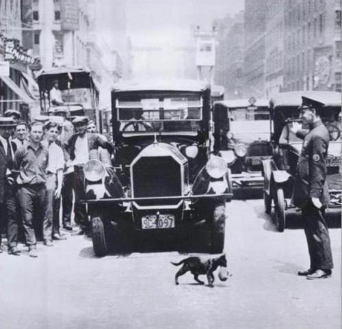 fyeah-history:  Cat Crossing a street carrying kittens, 1925