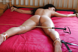 alexandhissubmissivepet:  Ready for her punishment -Sir