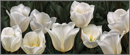 Nine White Tulips For Michelle http://dmvculture.com