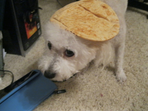 thebayharborbutcher submitted:   all we have is pita  he looks so ashamed
