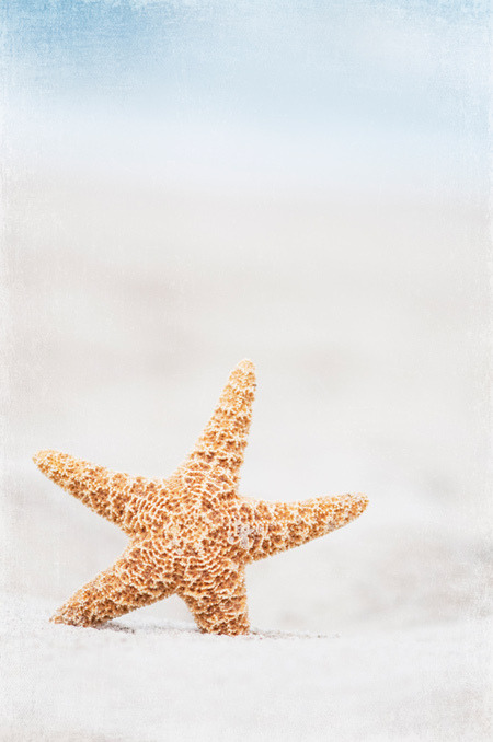 Starfish. (by CarolynsHope)