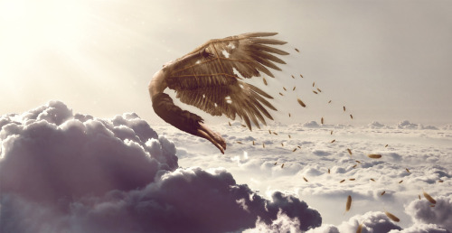 lohrien:  Glory of Icarus by *rEyeD33  For a hair of a second risks areworth it. Then we die.