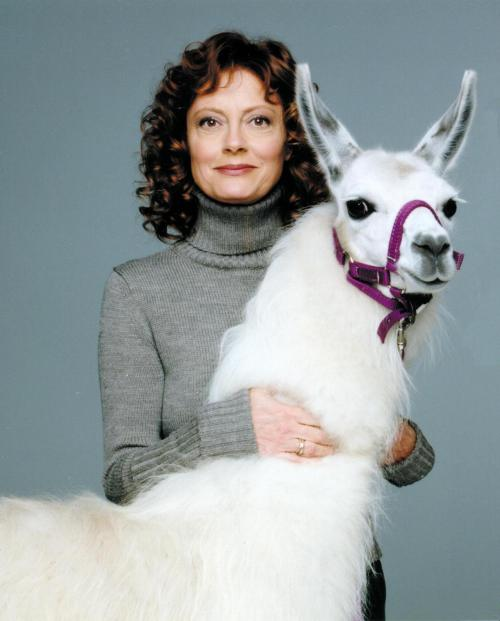 heytinafey:  here's a picture of susan sarandon + a llama enjoy ur night