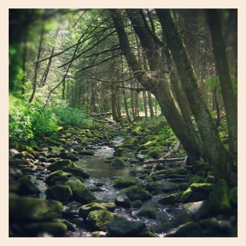 Into the wild #stream#creek#water#nature#Pennsylvania (Taken with Instagram)