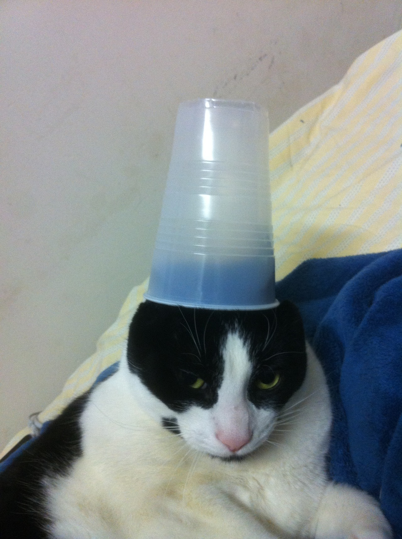 derpycats:  buddy wearing his new hat.