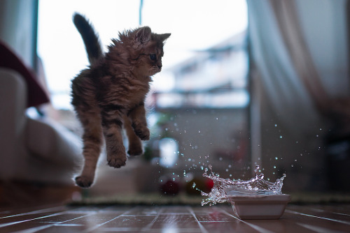 photogenicfelines:  Kitten in Motion (by torode)  I squeed.