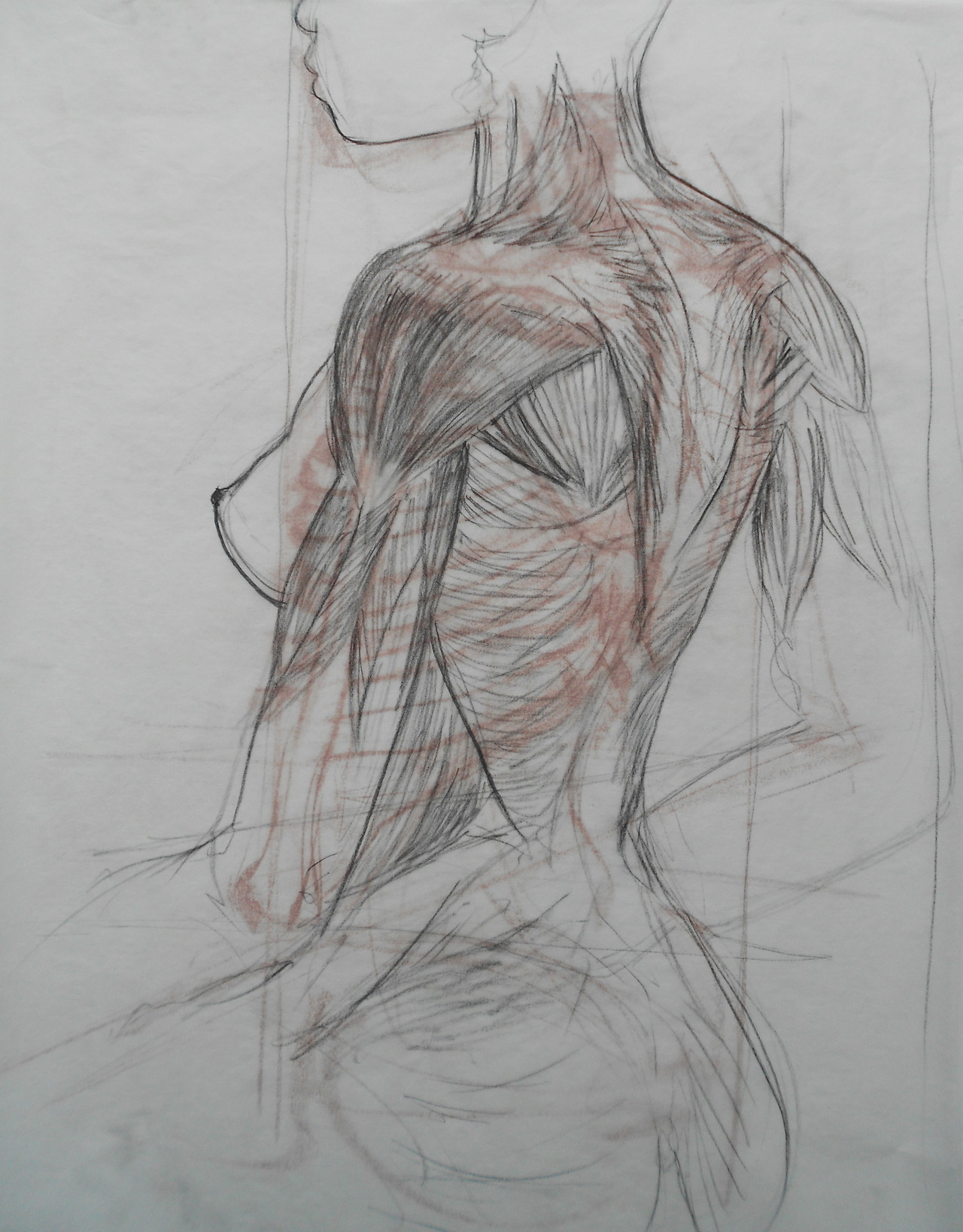 artforadults:  anatomy study of upper torso Tumblr shou-yuan.com
