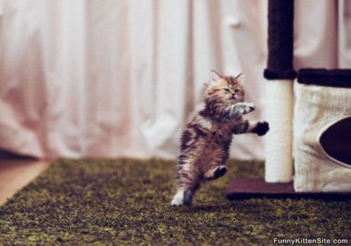 zumbidodelviento:  Breakdancing cat