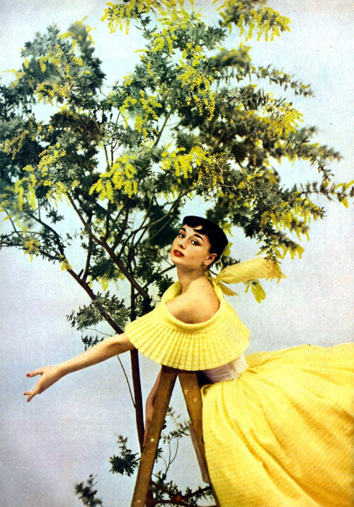 theniftyfifties:  Audrey Hepburn wearing a yellow gown by Ceil Chapman for Harper's Bazaar', 1952. Photo by Richard Avedon.