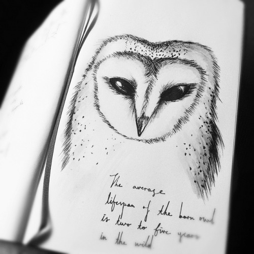 if i were to be an owl, i will be the owl with the heart-shaped face. the barn owl.