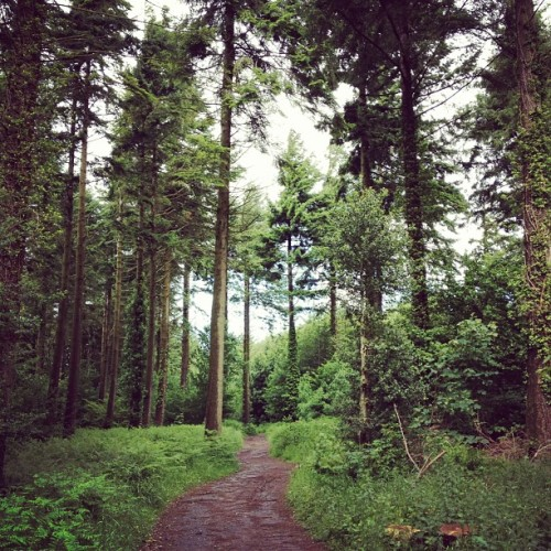 In the forest. (Taken with Instagram)
