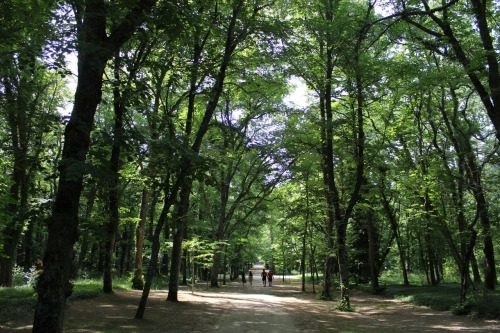 Walking in the forest surrounding the Royal Palace of La Granja de San Ildefonso.