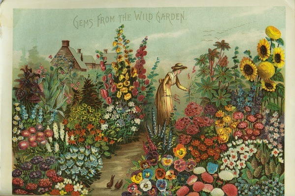 wallacegardens:  Gems from the Wild Garden (1888), postcard from the Rawson Company catalog.