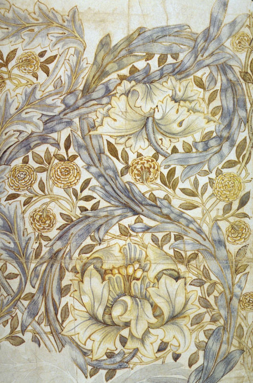 wallacegardens:  African Marigold, textile drawing, William Morris (1876).