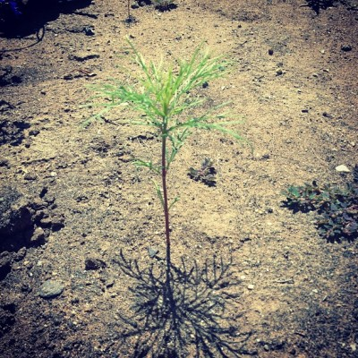Baby tree (Taken with Instagram)