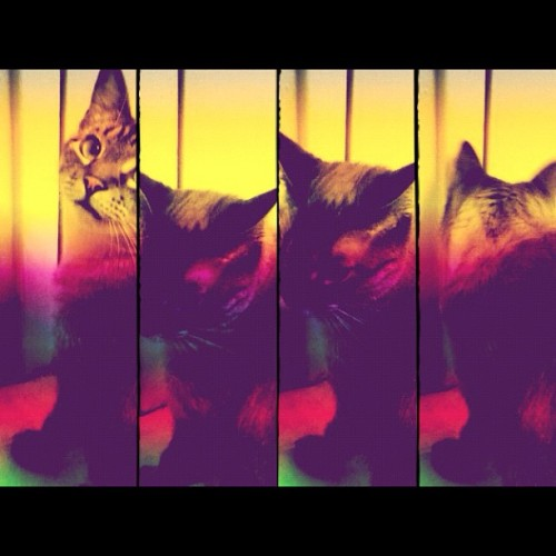 Rainbow kitty #stella #cat #kitty #cute (Taken with Instagram)