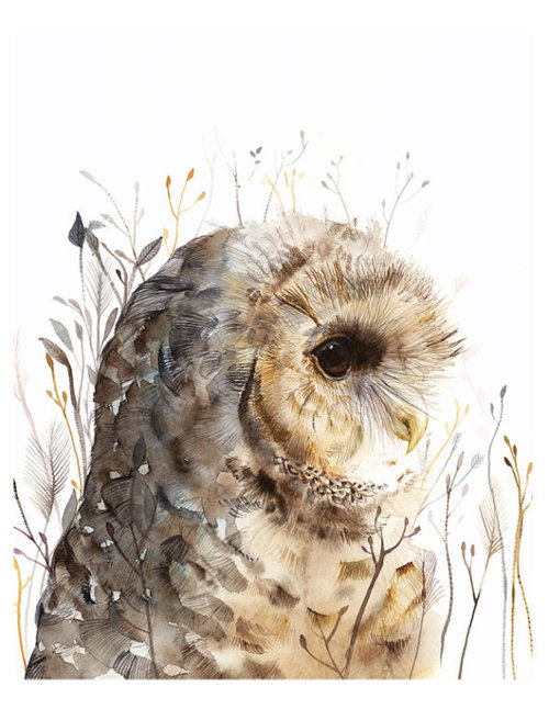 danceabletragedy:  Spotted Owl by Amber Alexander
