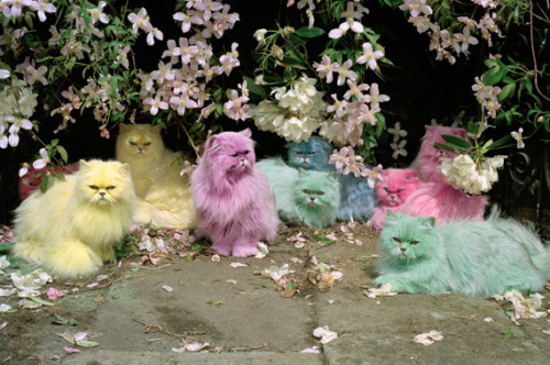 'Pastel cats' by Tim Walker, 1999. This is how Tumblr begun.