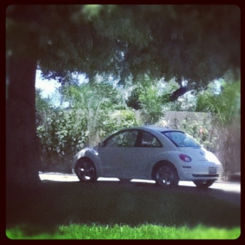 Punch buggy no hit back @haydenemmal  @bakeroy  … #car #vehicle #vw #nice #trees #parked #niceride #ride #haha (Taken with Instagram at New Orleans, LA)