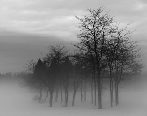ominousplaces:  Trees in the fog, by JaYjAy1975.