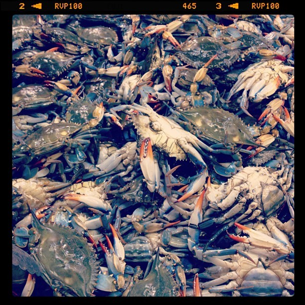 #Fresh #Blue #Crab #chinatown #hawaii #hawaiilife #iphonesia #seafood  (Taken with Instagram at MaunaKea🎍MarketPlace)