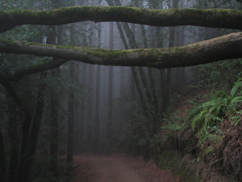 definitelydope:  The misty forest (by Tom Holub)