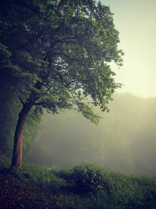 just-breezy:  ListenToTheForestOfOdes (by BphotoR)