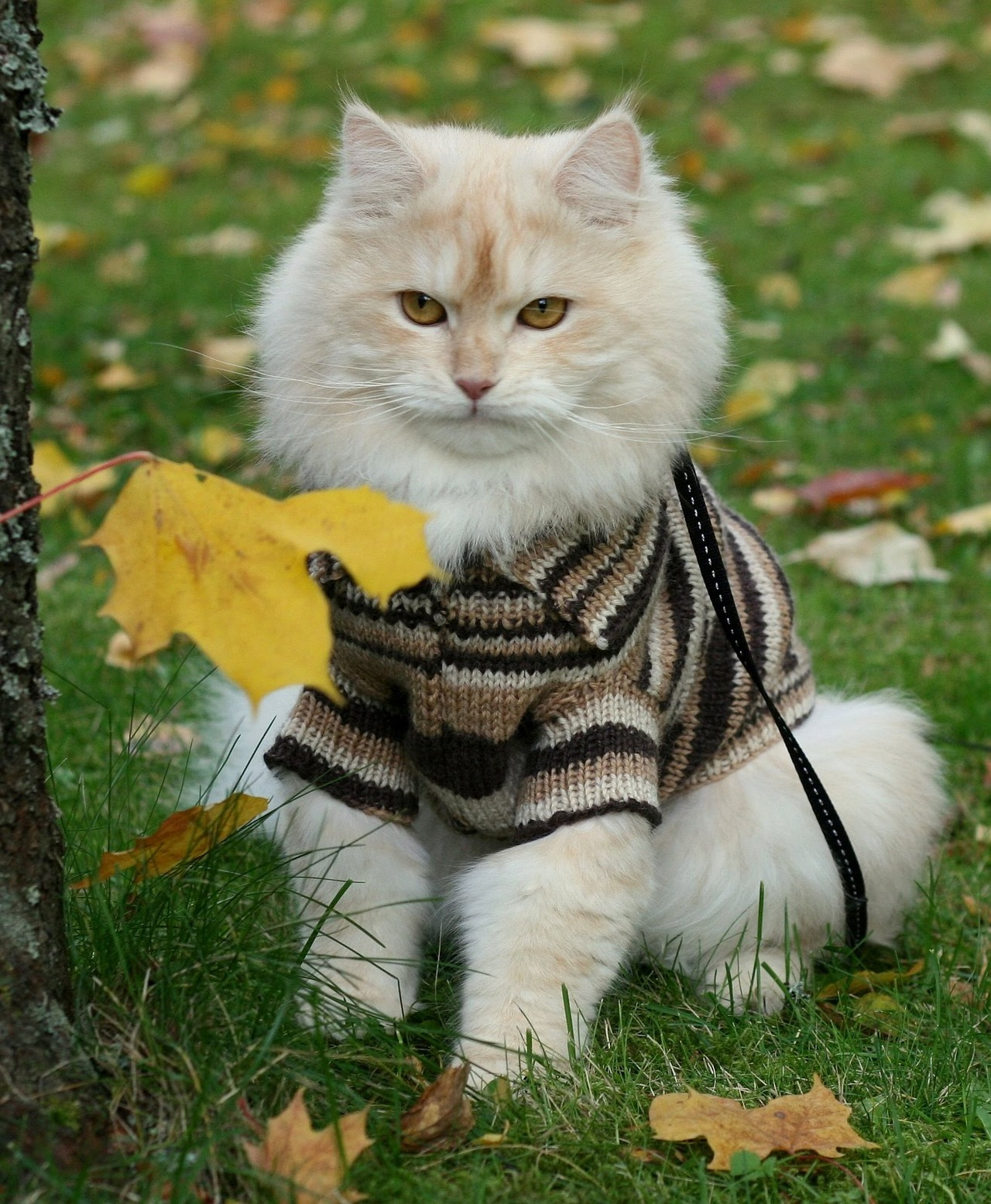 """Grandma knitted me a sweater and, as you can see, I liked it."" Photo by ©PuumanPuuhat"