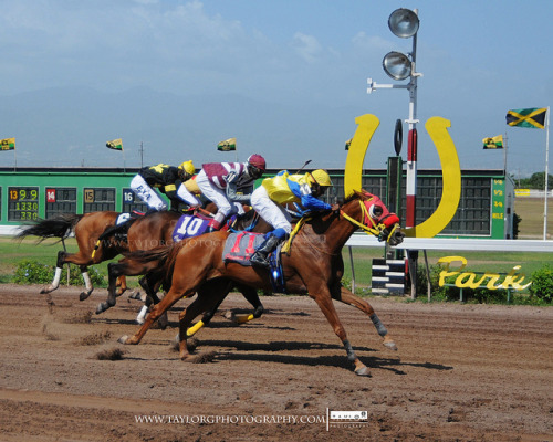 horse racing on Flickr.Via Flickr: a few weeks ago I had to cover horse racing as my weekend assignment for the paper. its hot…. n muddy because they wet the track every second… its a cool place to be if you like horses though i guess. word to shooters. always watch out for a horse running on the outside rail..