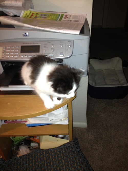 get out of there cat. you are not a paper copy. you are one of a kind and i don't think that i can handle more than one of you.