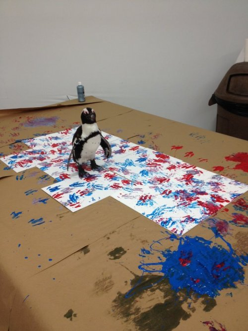 悪のペンギン(´;ω;`)   The Master of Penguin Paintings: ELVIS! Showing some patriotic love just in time for 4th of July! Elvis is an endangered African penguin who lives at the National Aviary.