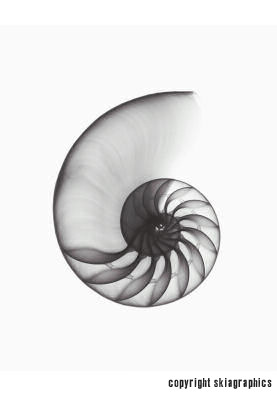 Chambered Nautilus hybrid sample portion www.skiagraphics.com X-ray art Dr. André Bruwer ©Skiagraphics