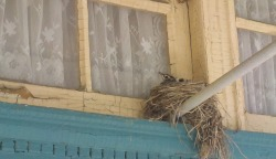 Bird's nest in the window of Cafe des Artistes in Leonardtown, MD.