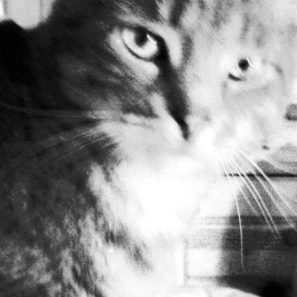Cat eyes #kitty (Taken with Instagram)