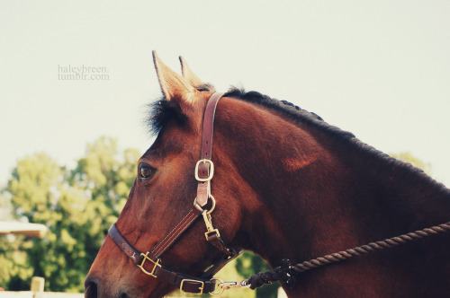 haleybreen:  mama star summer '12  I miss this horse so freaking much sometimes haha
