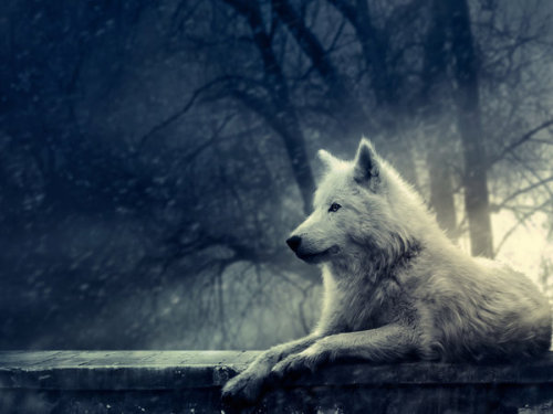 "fabulouslyfreespirited:  ""Night of the Wolf"" by lady-amarillis"
