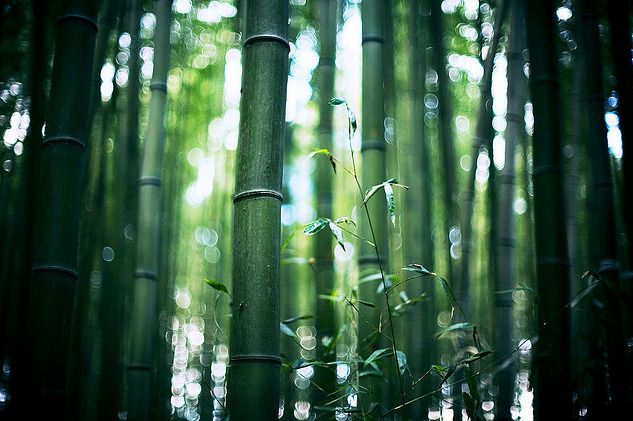 brujas:  colors of bamboo* 01