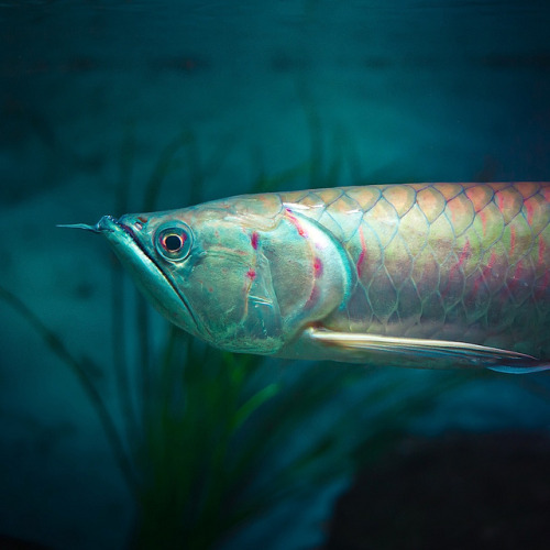our-lips-locked:  Nature Fish by ►CubaGallery on Flickr.