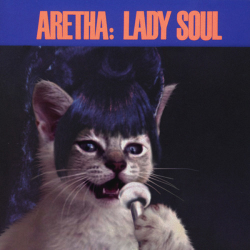 thekittencovers:  Kitty Soul