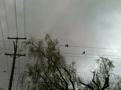 The crows were up to something.