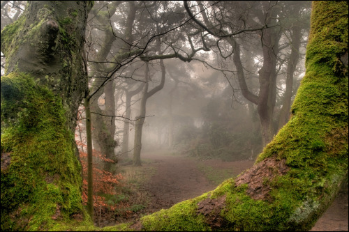 darkface:  Through the woods. (by bingleyman2)