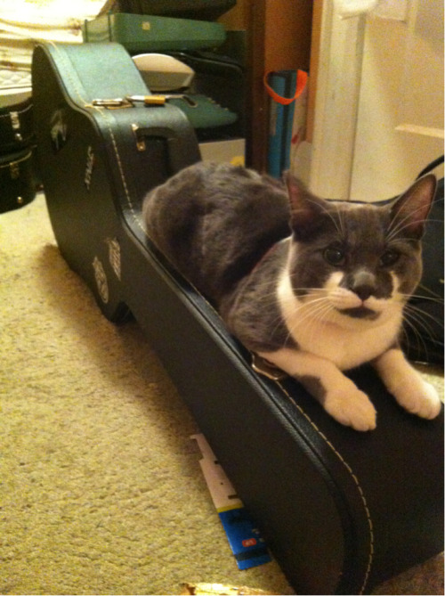 frogber:  Guitar case cat