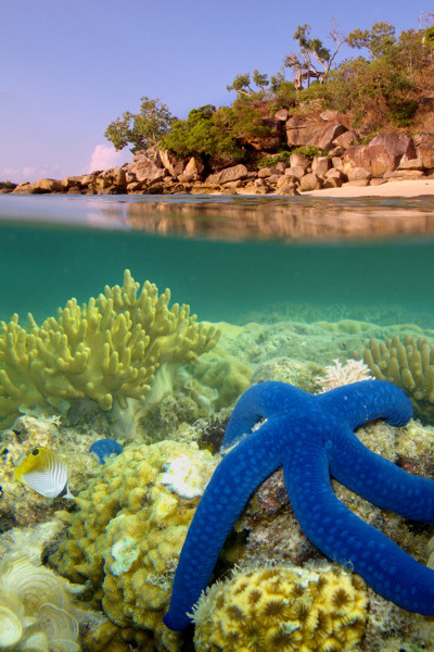 Beautiful Blue Starfish.