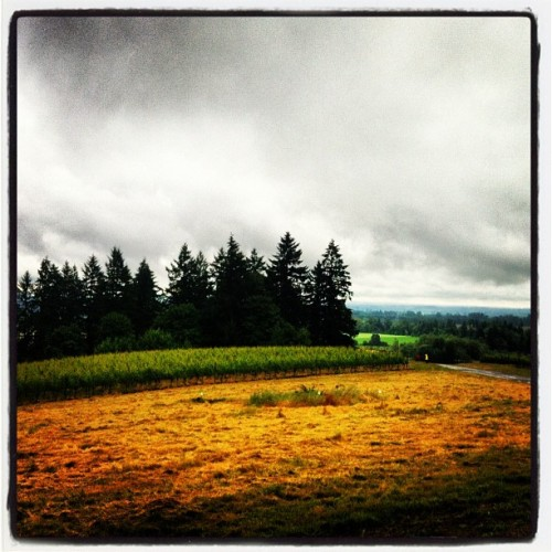"Today's ""summer"" Veloforma Winery Ride heads out from drizzly Dundee, Oregon (Taken with Instagram)"