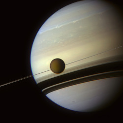 In the shadows of Saturn's rings Titan appears to be strung like a bead on Saturn's rings, which cast shadows onto the southern hemisphere of the gas giant in this beautiful image from Cassini. Faint but exquisite detail in the gas giant's upper atmosphere paints a tranquil scene. A thin band of bright white ammonia ice clouds is etched into the planet's disc towards the top of the image while clouds dotted below are faded scars of a huge storm that raged across the planet through much of 2011. Shadows cast by Saturn's iconic rings appear painted onto the planet's southern hemisphere in two thick bands broken by thin, lighter stripes, reflecting the intricacies of the individual rings. As Saturn's seasons progress towards northern hemisphere summer, the rings will appear to grow wider and wider. Meanwhile Titan, Saturn's largest moon, appears to hang on the planet's rings like a bead on a necklace. The effect is a result of the line-of-sight viewing position; Titan orbits Saturn at an average distance of 1,221,870 km. reblogged from unknownskywalker