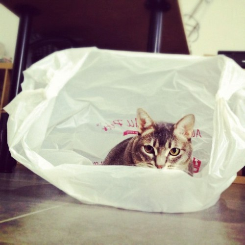 Guess who finally found a large enough bag to contain him? (Taken with Instagram)