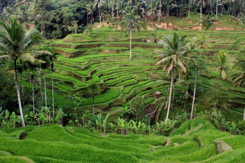 Ubud, Bali, Indonesia submitted by: winiwin, thanks!