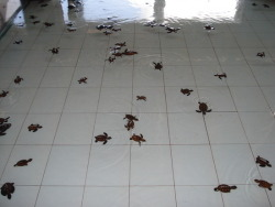 a sanctuary for baby turtles   huaaaaaaaa… :o really want those turtle *o*